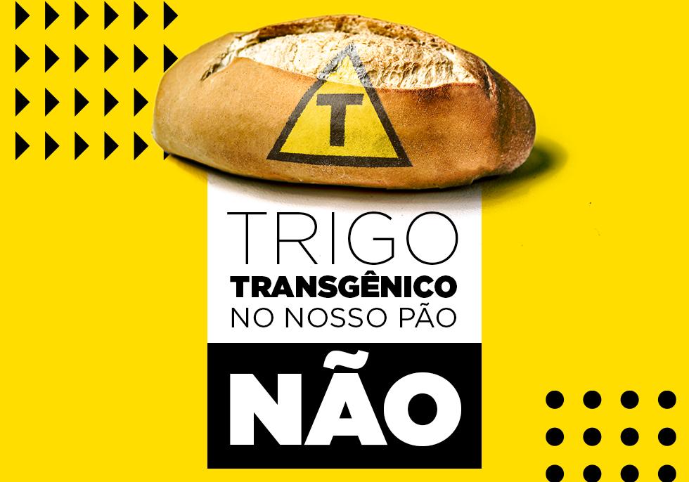 202011_trigo-transgenico_peticao_capa_v01