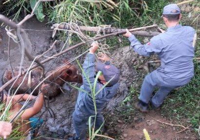 O animal foi resgatado após uma grande operação que durou 3 horas. (Foto - Bombeiros)