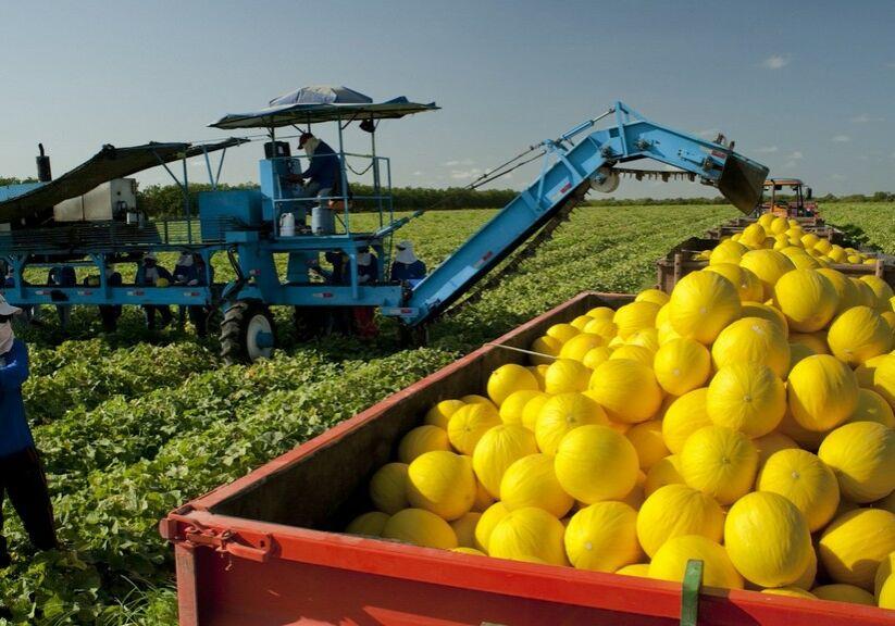 Exportação de frutas